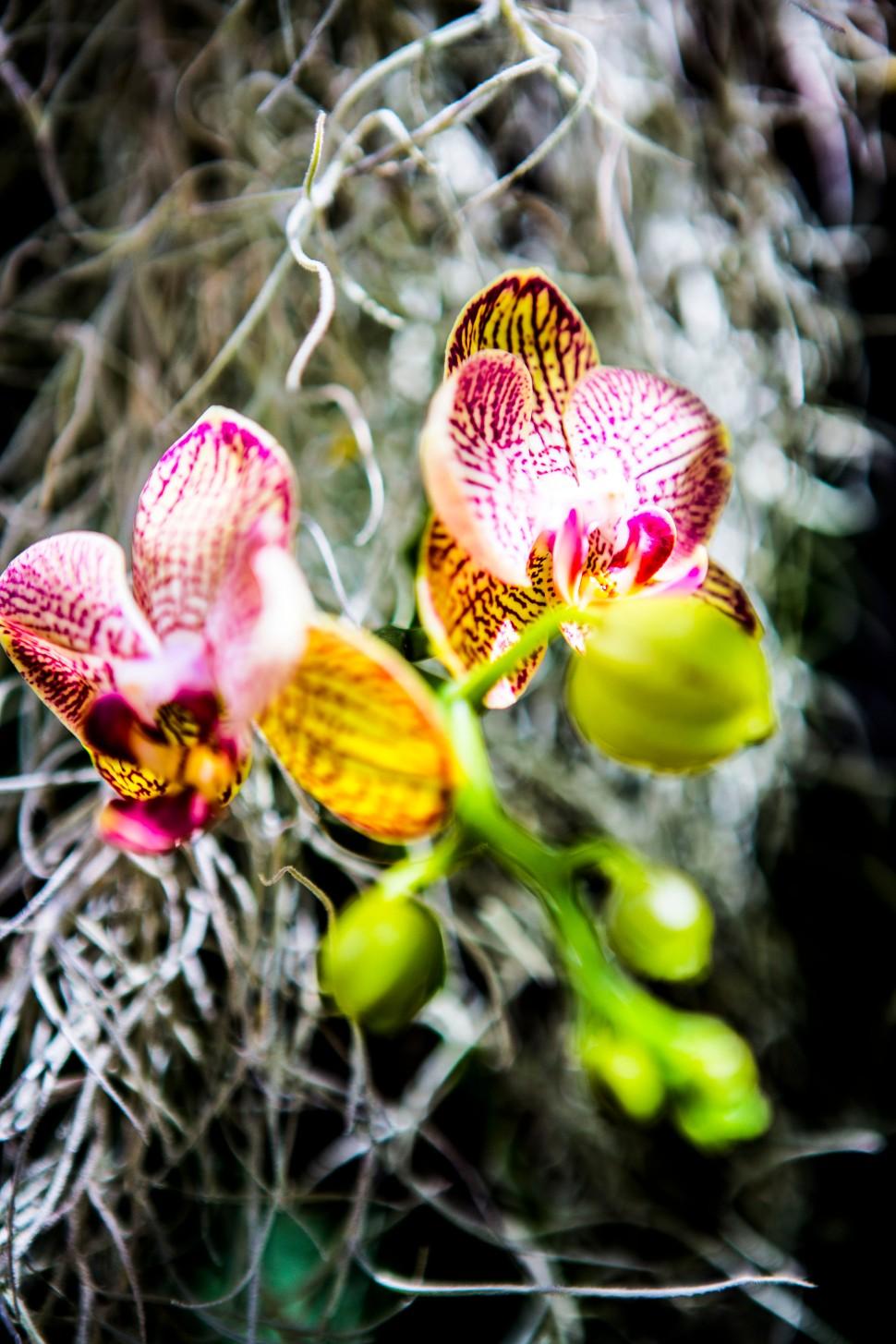 Orchideen_AndreaNagel
