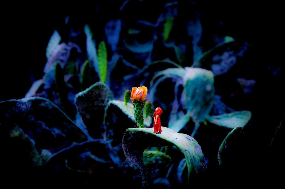 Kaktusblüte_orange_Lo_Fi_Mädchen_K